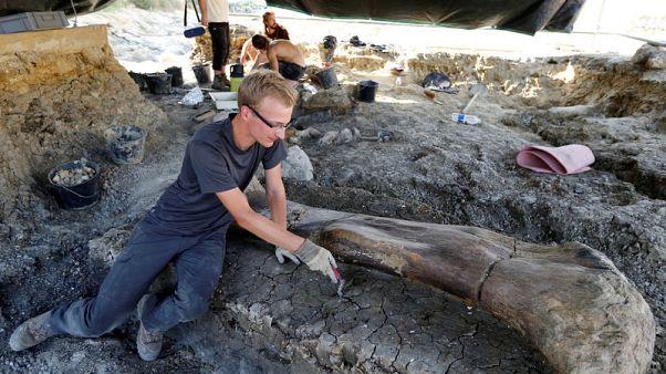 Giant dinosaur bone found in southwestern France