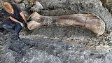 العثور على عظمة ديناصور عملاق في جنوب غرب فرنسا