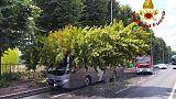 Firenze:albero cade su pullman,no feriti