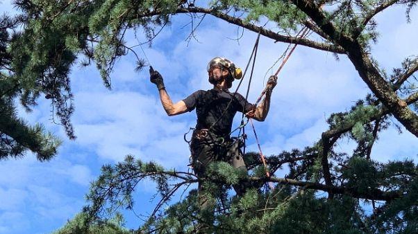 Alpinista-arboricoltore,una vita sospesa
