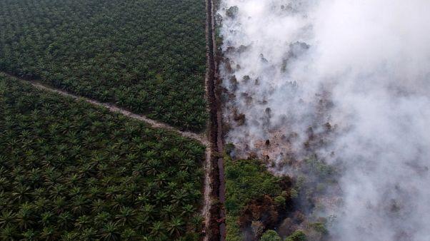 إندونيسيا ترسل آلافا من قوات الأمن لمكافحة حرائق الغابات