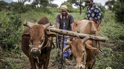 Il est nécessaire de renforcer la résilience en Afrique afin d'améliorer la sécurité alimentaire face au changement climatique