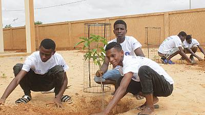 'One Migrant – One Tree': Over 100 Migrants Plant Trees on Niger's Independence Day