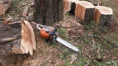 Si butta in dirupo per evitare tronco
