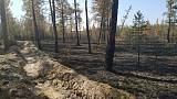 Russia says Siberian wildfires started on purpose by illegal loggers