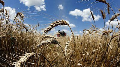 مصر تشتري 415 ألف طن من القمح الروسي والروماني والأوكراني