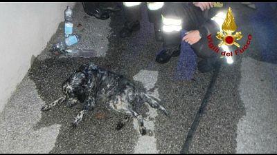 Vigili fuoco rianimano cane con ossigeno