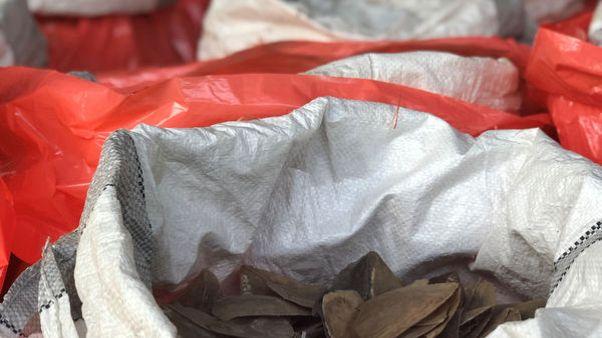 سنغافورة تحظر تجارة العاج المحلية اعتبارا من 2021