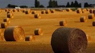 ألمانيا تسعى لأسواق جديدة لتصدير القمح بعد انفتاح السعودية على روسيا