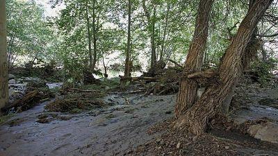 Tempesta Vaia, riciclati tronchi caduti