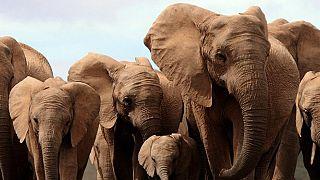 L'Agence Française de Développement (AFD) et Namibian Association of CBNRM Support Organisations (NACSO) organisent un workshop pour la conservation des écosystèmes namibiens