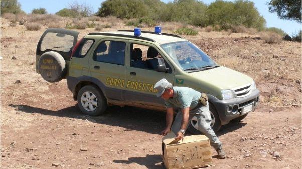 "Sabbia rubata: ""ganasce fiscali a ladri"""