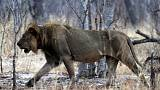 Conservationists push at CITES conference to ban trophy hunting