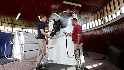 Dubai uses extreme cold cryotherapy to treat racehorses in world first