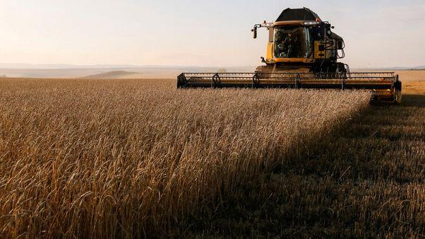 Exclusive: 'Dear Vladimir': VTB asks for Putin's help to create Russian grain champion