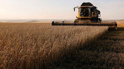 مؤسسة الحبوب السعودية: شراء 10 بالمئة من احتياجات القمح من شركات سعودية بالخارج