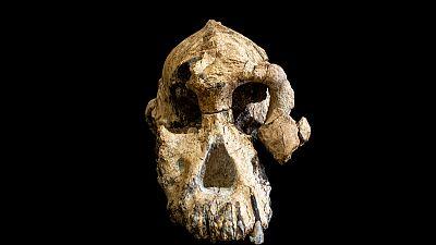 علماء يكتشفون جمجمة مكتملة تقريبا لأحد أسلاف البشر