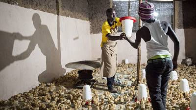 United Nations Industrial Development Organization (UNIDO) - Food and Agriculture Organization of the United Nations (FAO) to promote green opportunities to accelerate youth employment in Africa's agricultural sector