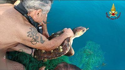 Liberata tartaruga impigliata in rete