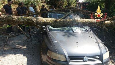 Albero su auto, donna ferita lievemente