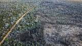 Madagascar forest destruction wiping out humans' tiniest relative