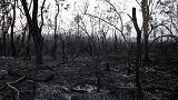 As Bolivian forests burn, Evo's bet on Big Farming comes under fire