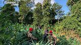Coltivavano 780 piante marijuana,arresti