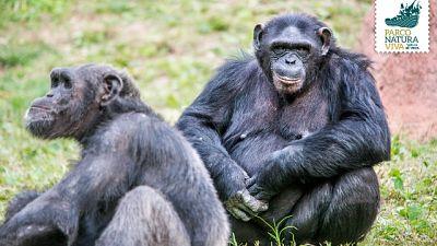Scimmie in fuga, parco evacuato e disagi