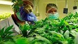 North Macedonia banks on medicinal cannabis growth to boost economy, exports