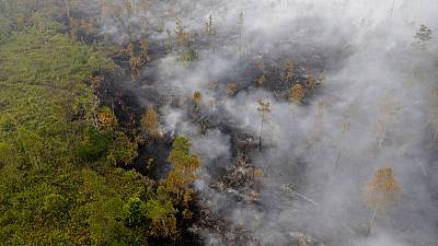 Indonesia has not imposed tough enough penalties for plantation fires - Greenpeace