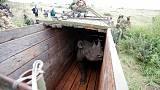 WWF says it did not push for rhino relocation process where 11 died