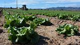 Getting lettuce into Britain - Spanish farmers baulk at no-deal Brexit
