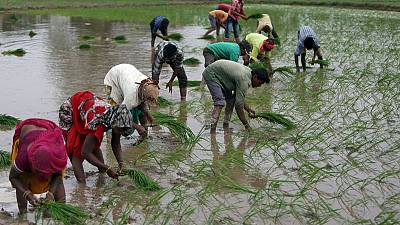 Explainer: Why strong monsoon rains are not necessarily good news for Indian farmers