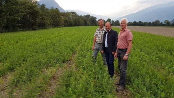 Vaia, i nuovi boschi crescono in Tirolo