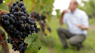 Warming climate puts Austria's hip Gruener Veltliner wine at risk