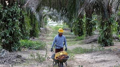Palm oil body to wield stick to get consumer goods giants to go green