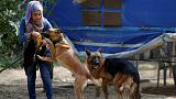 Gaza's growing pet population stretches scant vet resources