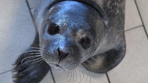 Assessore vede foca e dice 'è un negro'