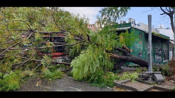 Maltempo: albero si abbatte su bus