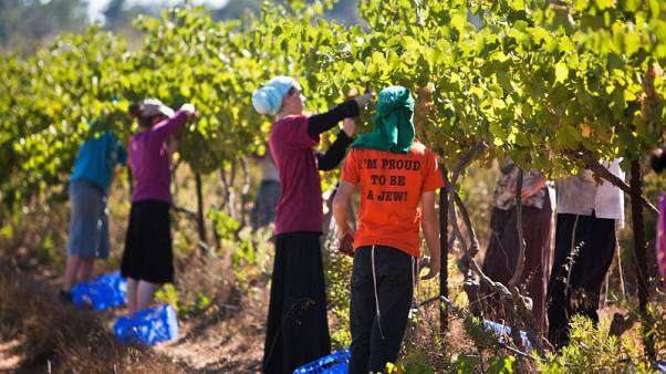 EU court rules goods from Israeli settlements must be labelled