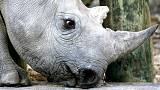 Malawi receives 17 black rhinos from South Africa