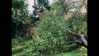 Venezia, danni a giardini storici