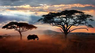 Tanzania's Big Five: Why Tanzania is an African Leader for Meetings, Conferences and Business Tourism