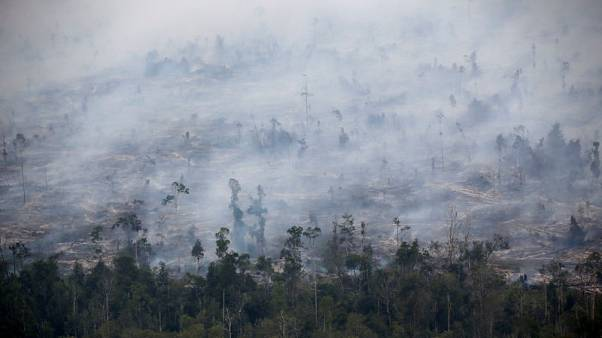 Indonesian fires burnt 1.6 million hectares of land this year - researchers