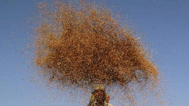 World food prices surge in November, lifted by meat, vegetable oils- U.N. FAO