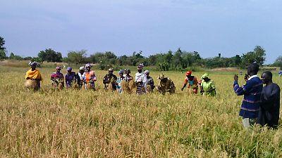 Sénégal : la désalinisation des terres donne un nouveau souffle à la production agricole avec le soutien de la Banque africaine de développement