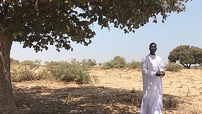 Sénégal : Meckhé, ville écologique et capitale artisanale résiste à la contrefaçon chinoise