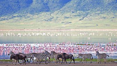 Tanzania wins Best International Wildlife Destination