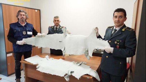 Gdf sequestra 39 pelli alligatore porto