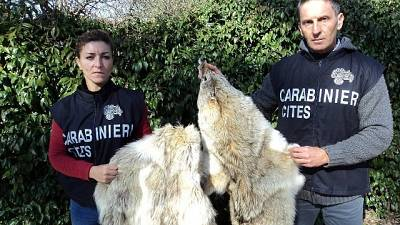 Sequestri pelli animali Arezzo e Firenze